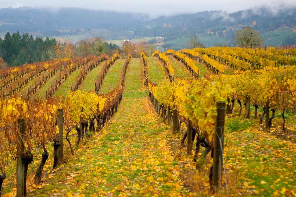 Bovino Vineyards