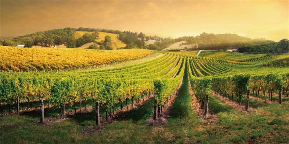 Thomas Fogerty Winery & Vineyards