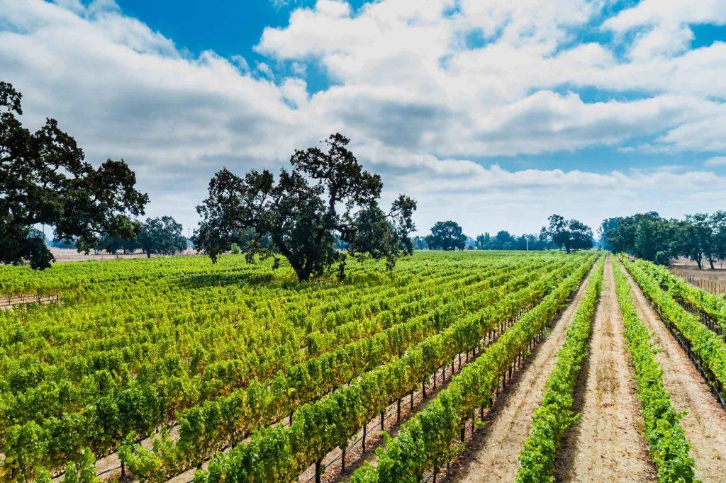 Zin Alley Winery