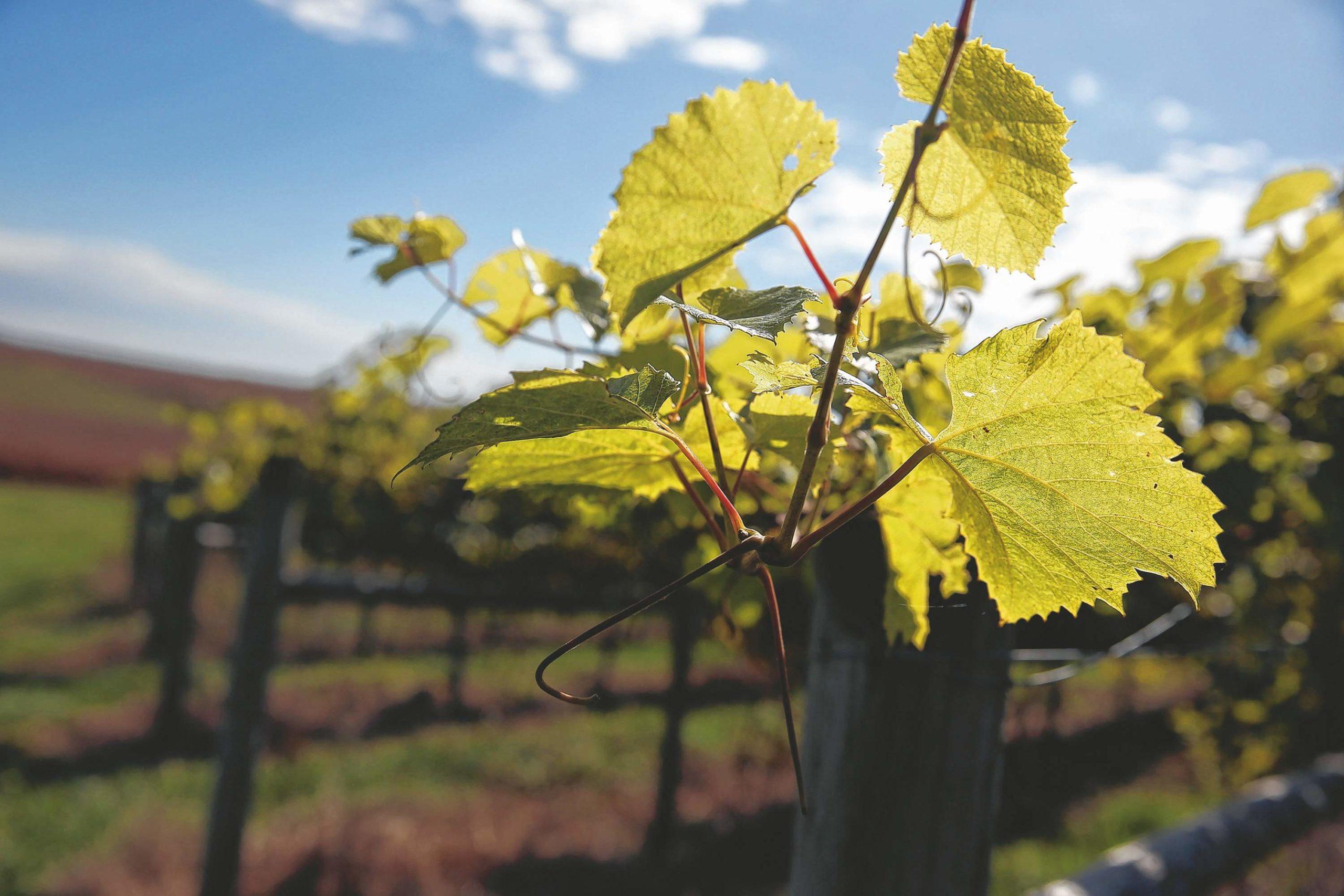 Vincent Estate Vineyards & Winery